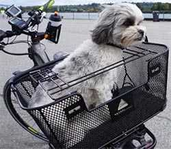 No. 5: Axiom Dog Basket - Front or Rear Mounted - Best Dog Baskets for Bikes