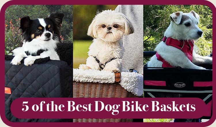 How many calories can you burn riding an electric bike? Why not take your dog along for the ride?