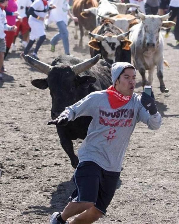 Bull+run