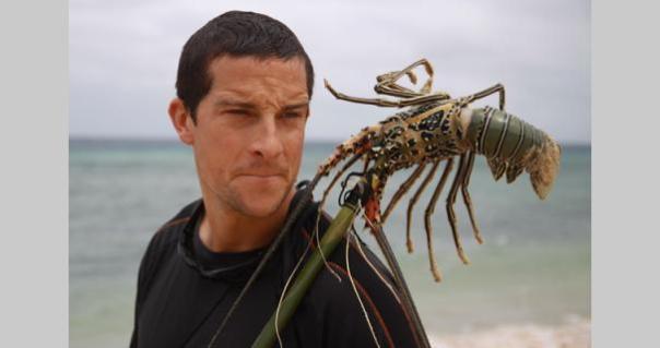 bear-grylls-born-pacific-lobster2