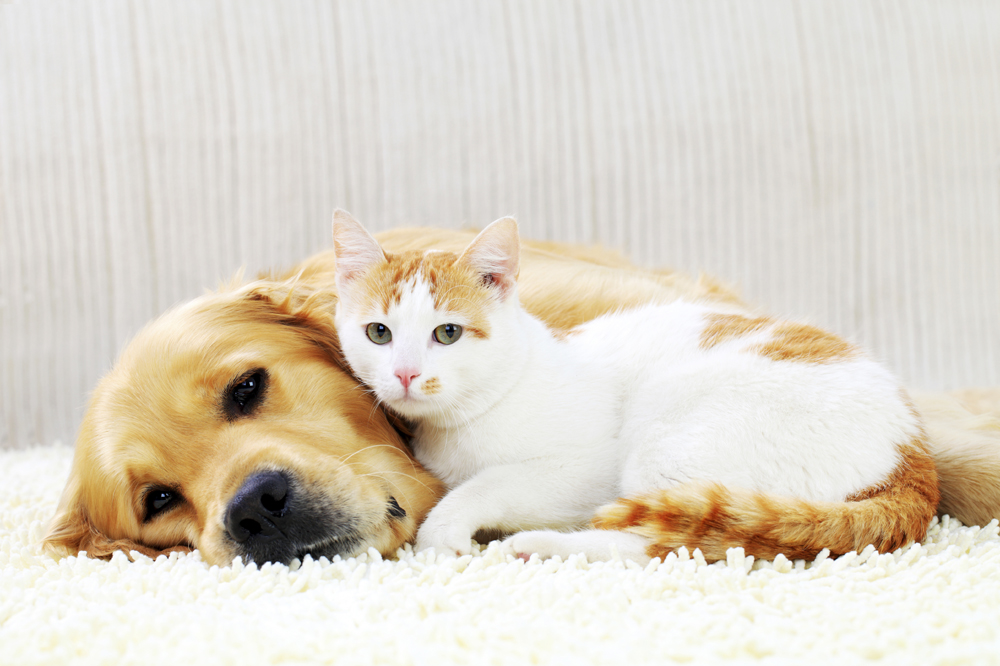 Image result for Pet Insurance Istock