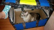 Naboo thinks she's a treasure.