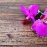 Orchidee auf Holzuntergrund