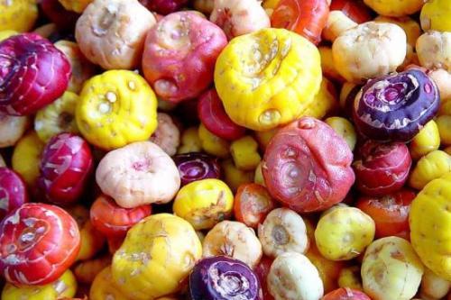 Схема посадки гладиолусов весной, обработка луковиц
