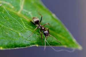 Как избавиться от муравьёв в теплице