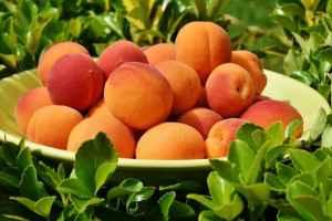 Как выбрать сорт абрикоса – инфографика