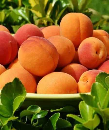 сорта абрикоса