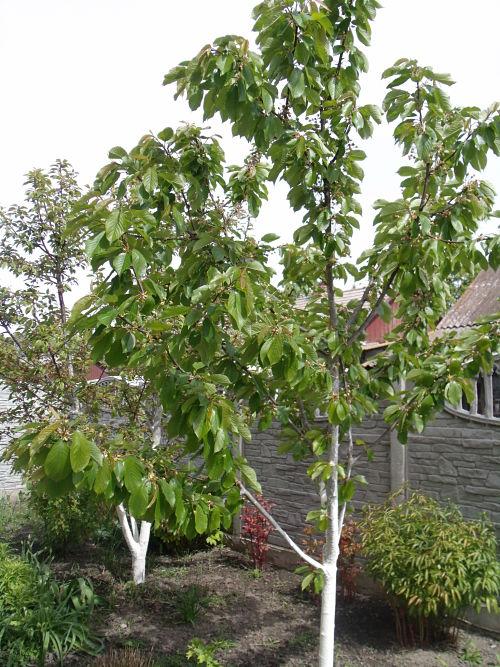 Поэтапный уход за садом летом: обрезка, подкормка, опрыскивание