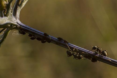 Как бороться с тлей на дереве