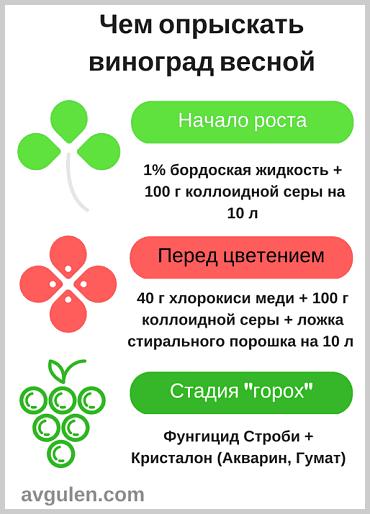 Опрыскивание винограда весной по методу Н. Курдюмова