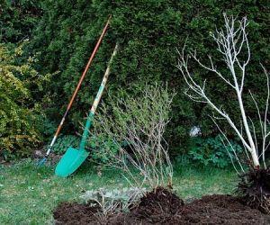 Как посадить деревья, если близко грунтовые воды