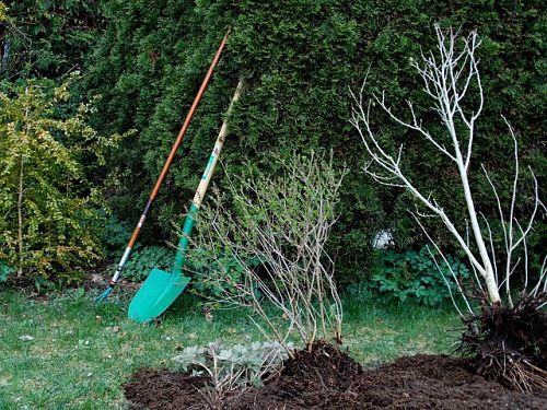 Как сажать деревья, если близко грунтовые воды