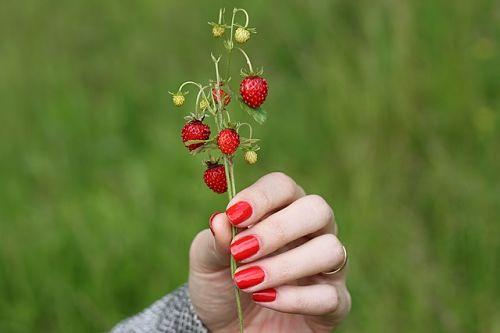 Уход за земляникой садовой весной Сад и огород