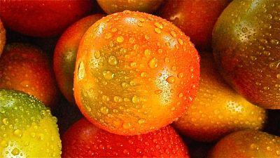 Посев помидоров под зиму двумя способами