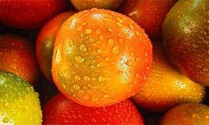 Посев томатов на рассаду под зиму двумя способами