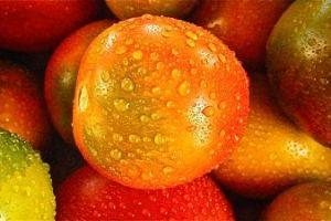 Посев томатов под зиму двумя способами