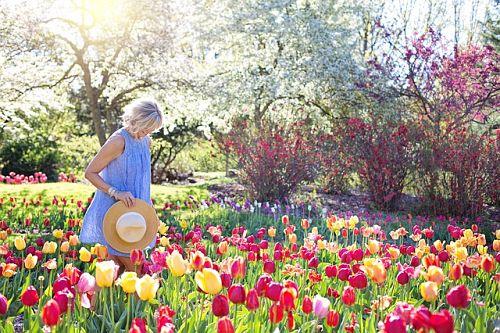 посадка тюльпанов в открытый грунт