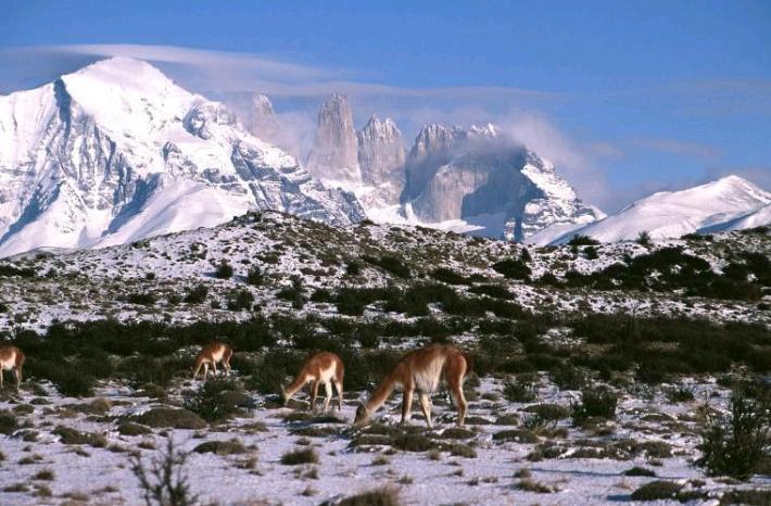 Parque nacional Torres del Paine. Obrigado a visitchile.com.