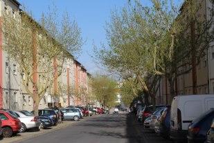 Arborização de uma rua no Bairro Social do Esteval