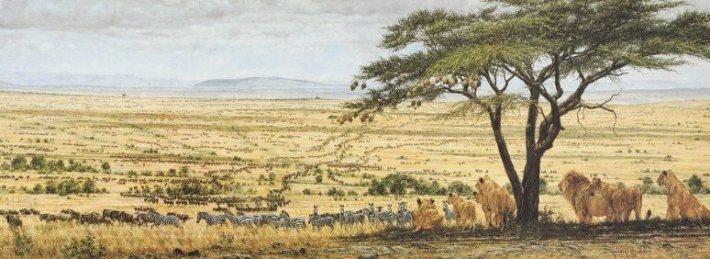 Srengeti - stop the serengeti highway
