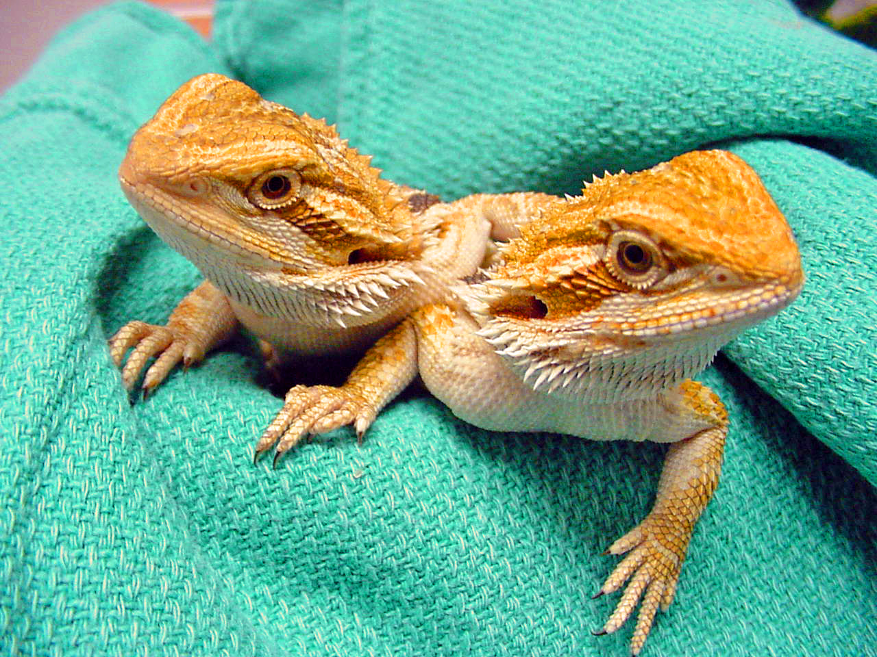Reptile Diseases