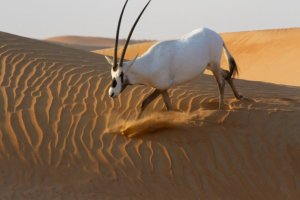 How Emirates is supporting and preserving biodiversity