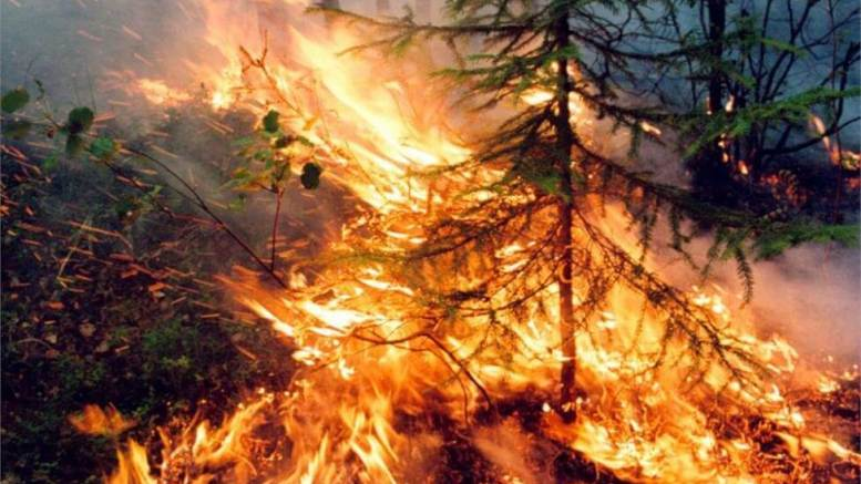 Russia's largest private airline to plant 1,000,000 trees in wildfire devastated Siberia 1