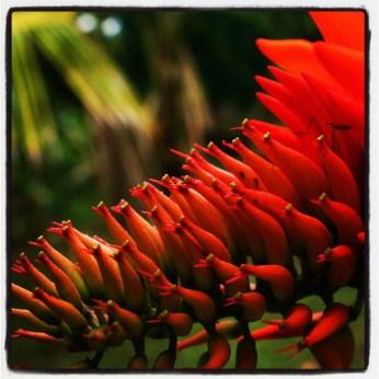 Unknown red flower
