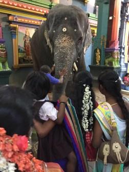 Pondicherry temple elephant