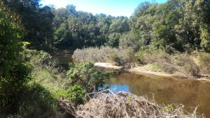 View of Pine River from Hillview Court Reserve