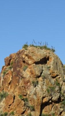 View of Pinnacles