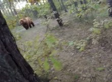 Controversial Bear Attack Video