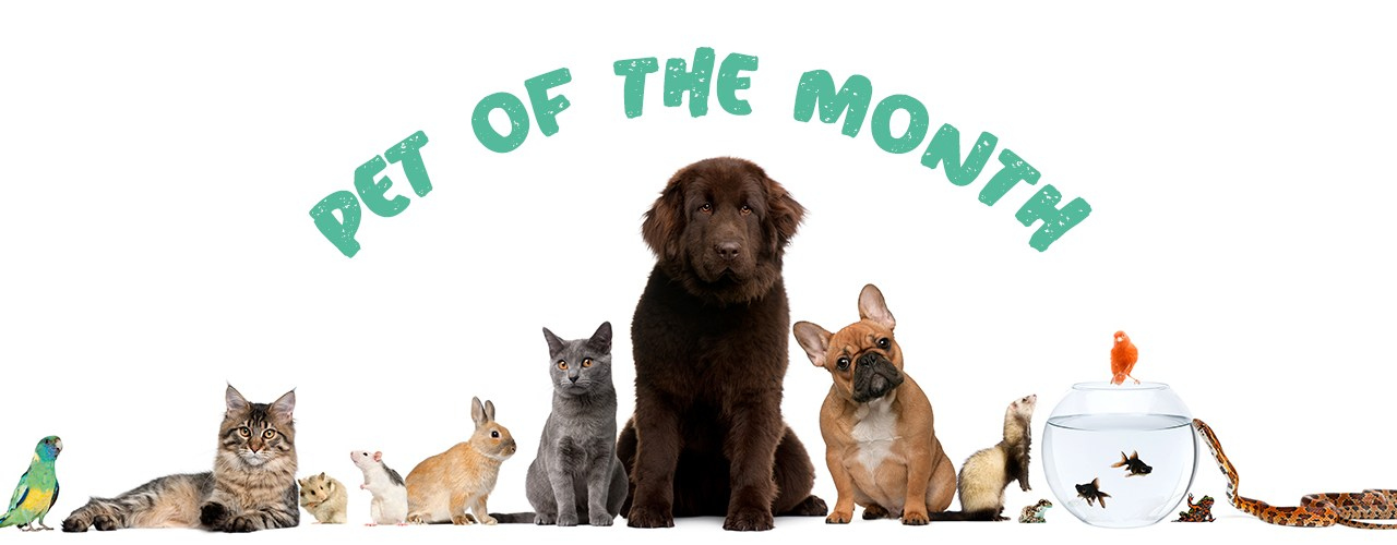 Dodger is our Pet of the Month