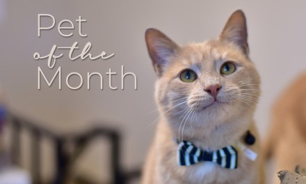 Beau is our Pet of the Month