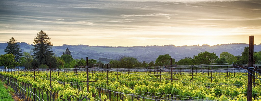 Introduction to Napa Valley