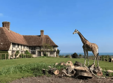 Holiday with the giraffes at Giraffe Hall
