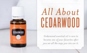 Young Living Cedarwood