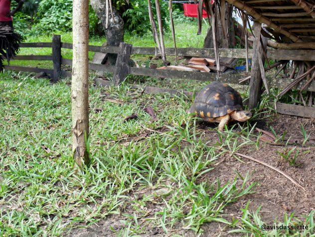 activites voyage ile aux natte sainte-marie madasgascar tortue