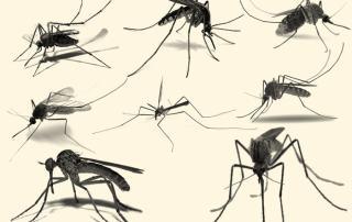 donatori sangue test nat west nile virus dengue chikungunya