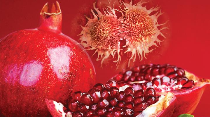 Pomegranate-LE-1116_rep1_hpmpac_hero