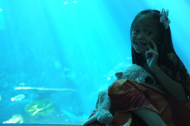 in SEA Aquarium