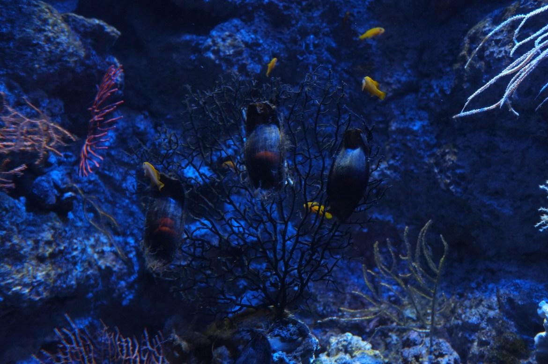 Shark eggs!