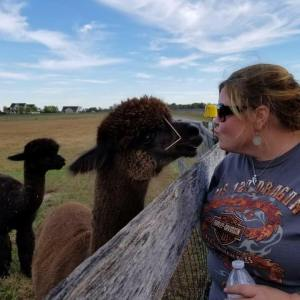 Motorcycle Day Trip to Our Local Alpaca Farm: I kissed an alpaca and I liked it!