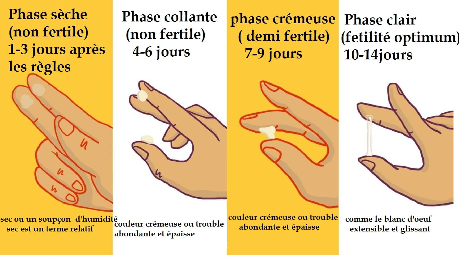 ovulation symptomes glaire