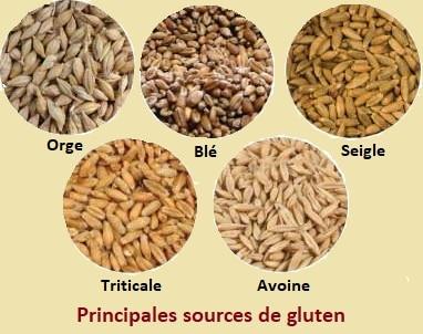 principales sources de gluten
