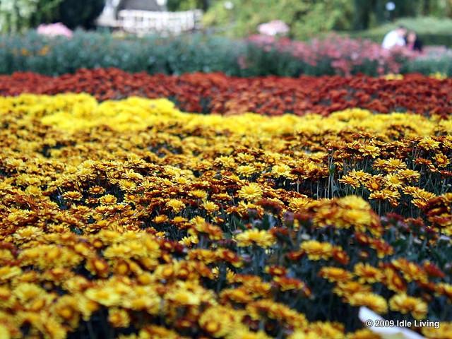 Iaşi, octombrie, Grădina Botanică