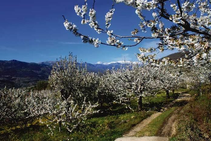 foto-del-valle-del-jerte-en-abril