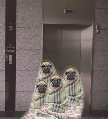 Animali in ascensore condominiale