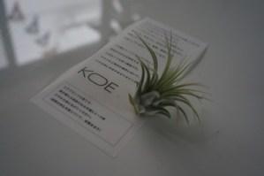 KOE Launch fashion show!
