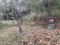 place clear, hive set